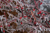 Winter Ice Storm — Stock Photo