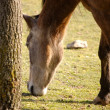Stock Photo: Horse eating