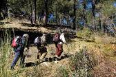 Three Elders trekking in the forest — Stock Photo