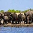 A group of elephant near a waterhole at etosha national park — Stock Photo