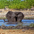An elephant swiming in a waterhole at etosha national park namibia - Lizenzfreies Foto