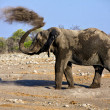 Photo: Elephant blowing dust in etoshnational park namibia