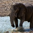 Elephant in a waterhole in etosha national park namibia — Stock Photo