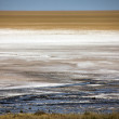 Etosha pan in etosha national park namibia — Stock Photo