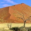 Stock Photo: Vast dune at Sossusvlei namib naukluft park namibiafrica