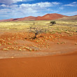 Stock Photo: View from une 45 near sossusvlei namibiafrica