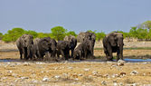 A group of elephant crossing a waterhole at etosha national park namibia — Stock Photo