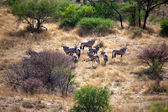 A group of oryx in daan viljoen game park namibia — ストック写真