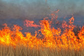 Bushfire in namibia — Stockfoto