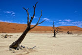 Dead trees in front of a orange dune in deadvlei namib naukluft desert — Stock Photo