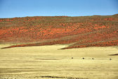 Namibrand nature reserve in the namib naukluft national park namibia africa — Stock Photo