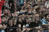 Football hooligans — Stock Photo