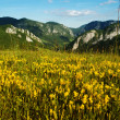Landscape with yellow flowers and blue sky — Stock Photo