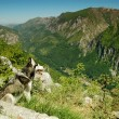 View of a beautiful valley with a husky dog in front — Zdjęcie stockowe