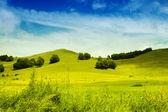 красивый альпийский луг с зеленой травы — Стоковое фото