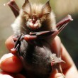 Stock Photo: Bat with child