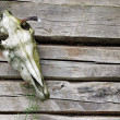 Stock Photo: Horse skull on wooden background