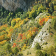 Autumn colors on a hillside — Foto de Stock