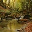 Stock Photo: Autumn leaves near stream