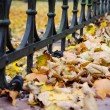 Autumn landscape with a fence — Stock Photo #8345761