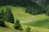 緑の芝生と美しい高山草原 — ストック写真