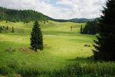 Beautiful alpine meadow with green grass — Stock Photo