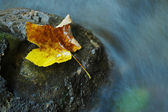 Autumn leaf near a stream — Stock Photo