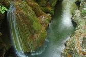 森林溪流在长满苔藓的岩石上运行 — 图库照片