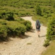 Stock Photo: Lonely trekker climbing up on road between junipers