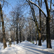 Winter in the park, snow covered alley and trees — Foto de Stock