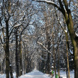 Winter in the park, snow covered alley and trees — Stock Photo
