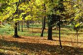 Beautiful quiet park in autumnal colors — Stock Photo