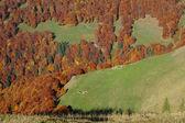 Hösten i oscar berg, rumänien — Stockfoto