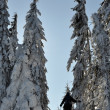 Stock Photo: Trees covered with hoarfrost and snow in mountains