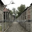 Auschwitz — Stock Photo #9547056