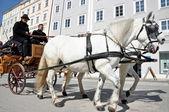 马驱动支架与游客在萨尔茨堡,奥地利 — 图库照片