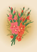 Pink and red gladioluses — Stock Vector