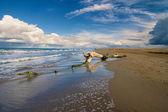 Trunk on a beach — Stock Photo