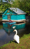 Blue wooden boat house and a white swan near lake — Stock Photo