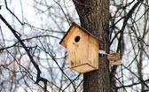 Wooden birds feeder on the tree trunk — Stock Photo