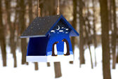 Blue feeder for birds in winter forest — Stock Photo