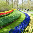 Beautiful spring flower bed in park garden — Stock Photo