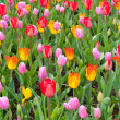 Beautiful spring flower bed in park garden - Stock Photo
