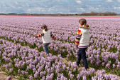Children playing on beautiful hyacinth field in Netherlands — Stock Photo