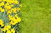 Beautiful spring flower bed in park garden — Stock Photo