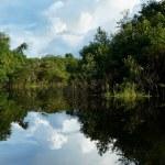 ������, ������: Amazon river Brazil