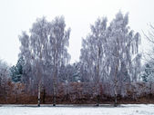 Trees in the winter nature background image — Stock Photo