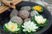 Mooie japanse waterlelies met een waterval — Stockfoto