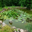 Beautiful classical garden fish pond gardening background — Photo