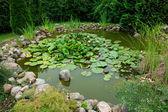 Beautiful classical garden fish pond gardening background — Stock Photo